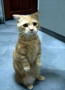 Sad Kitteh is shocked and saddened….